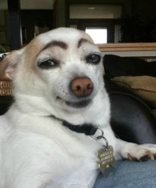 Dogs-With-Eyebrows-History-1